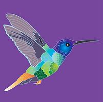 hummingbird square.png