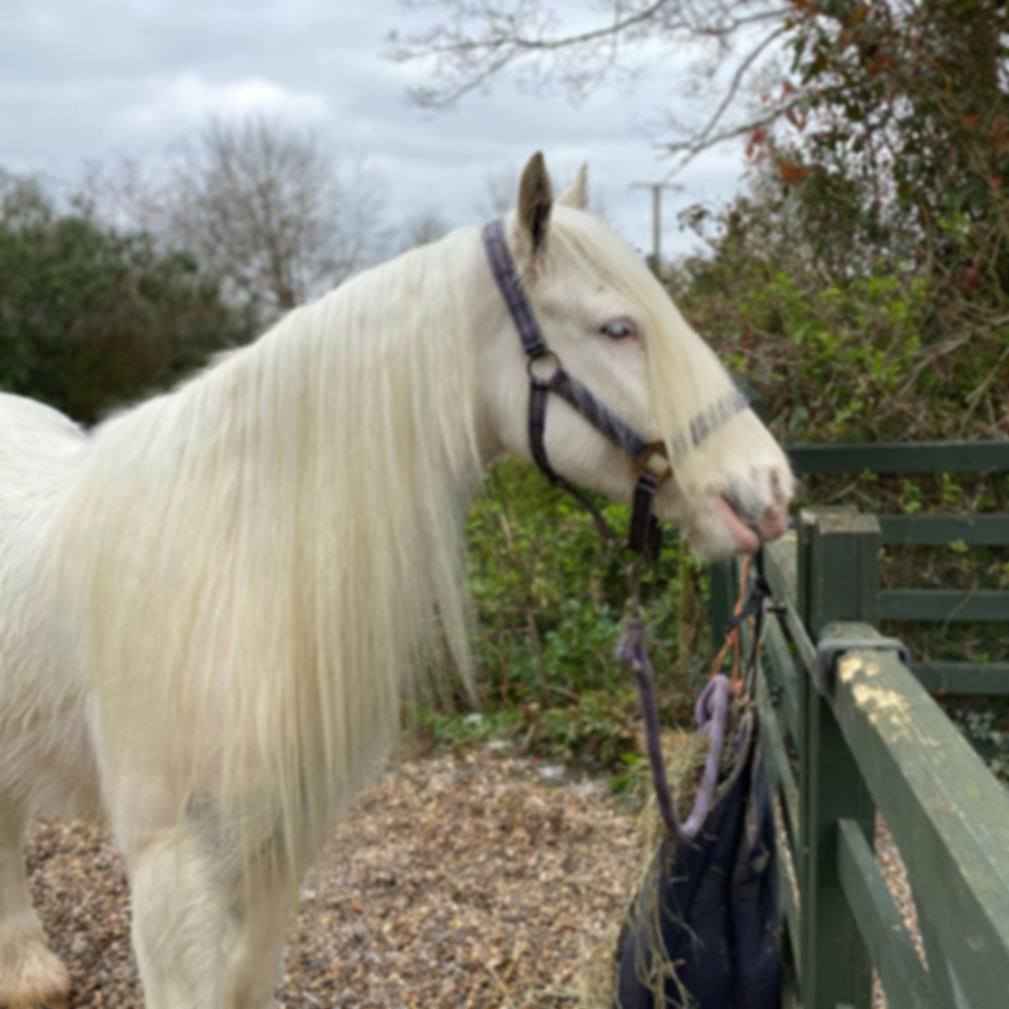 white horse with tidy mane