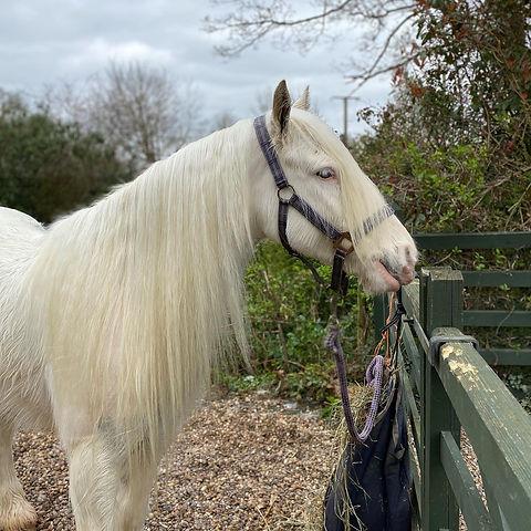 clean white horse.jpg