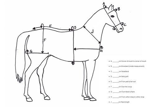 pony harness measuring chart
