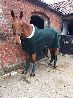 brown horse in rug