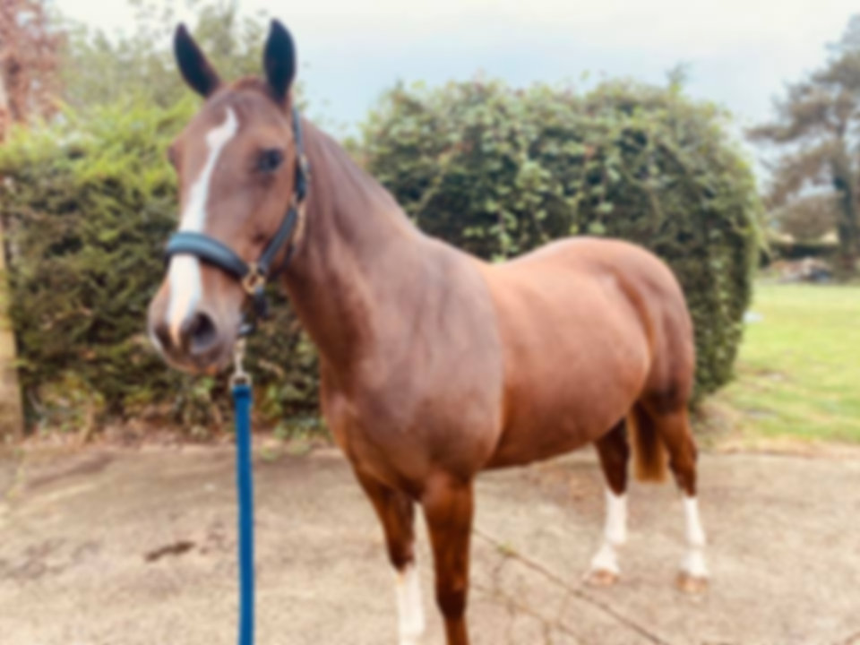 brown horse with glossy coat