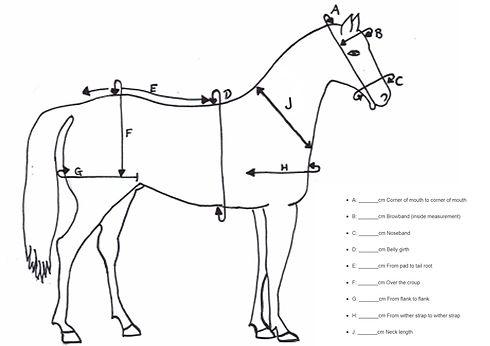 pony measuring chart