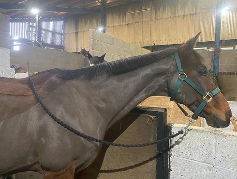 happy brown horse.jpg