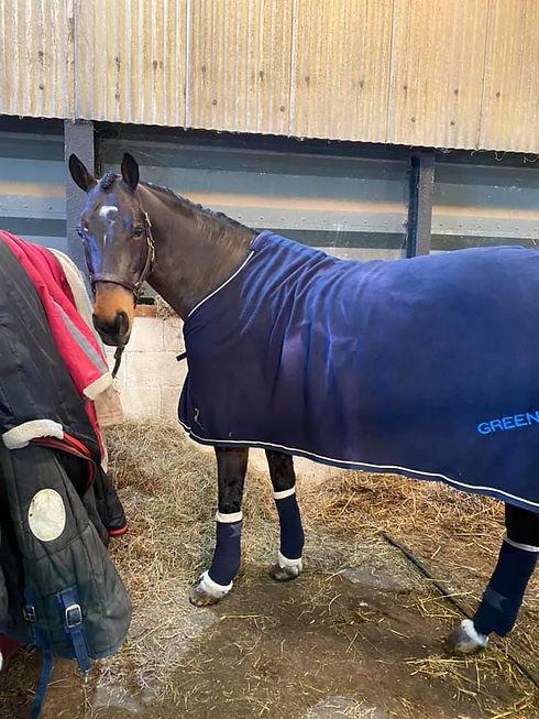 horse in rug.jpg