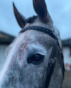 face of grey horse
