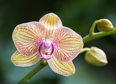 Orchid Love 2