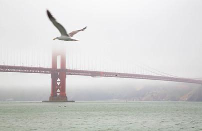 Golden Gate Flyby