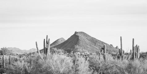 Desertscape BW