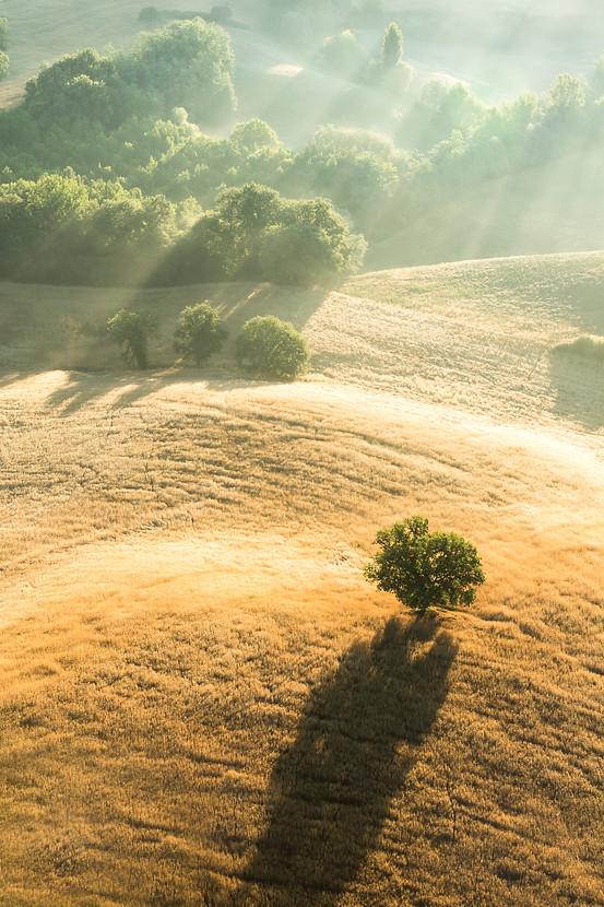 Lone Tree, Long Shadow