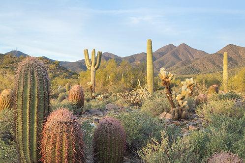 More Cactus Please