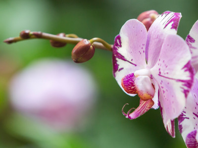 Orchid Love 3