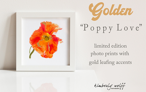 Golden Poppy Love