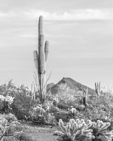 Cacti Views