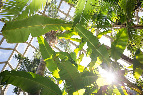 Botanic Light