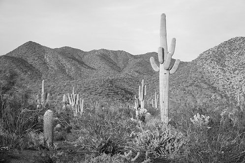Classic Scottsdale