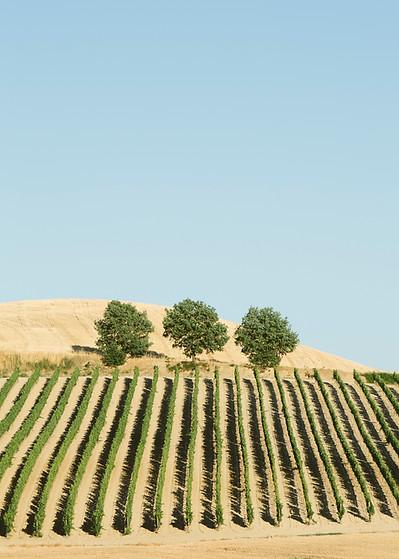 Winemakers Delight