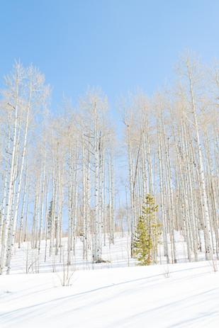 Bright White Winter Blue
