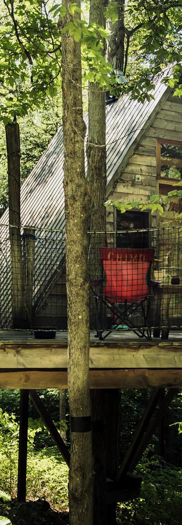 refuges dans les arbres