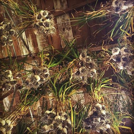 garlic ceiling.jpg