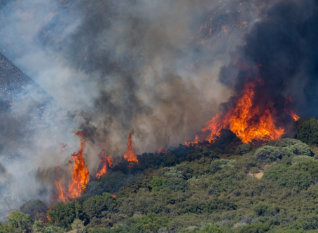 Emergency Averted: County of San Diego Rejects Dangerous Lilac Hills Project In Wildfire Zone