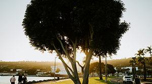 Tree San Diego.jpg