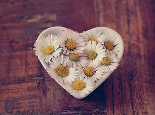 daisy-4110113_1920.jpg