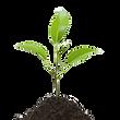 seedling%20level2%20(2)_edited.png