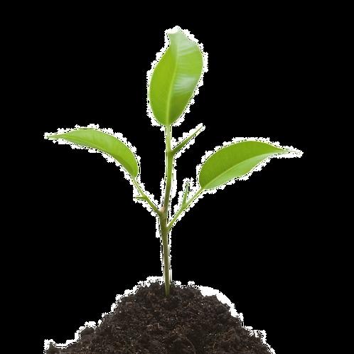 Seedling Level