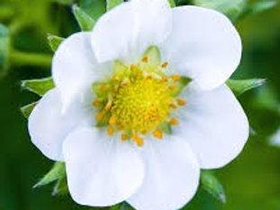 Blossom Level