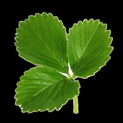 Leaf Level