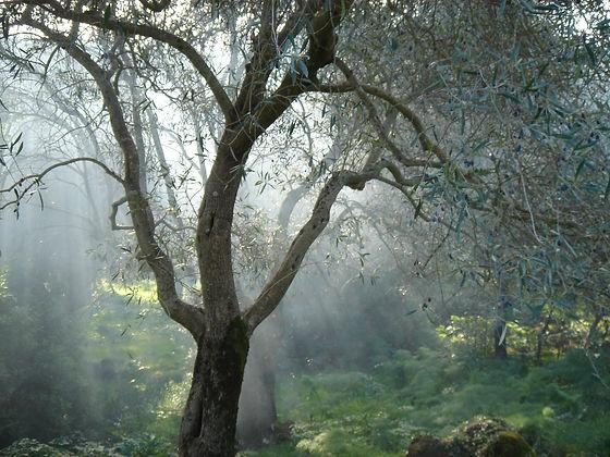 76 olivier.JPG
