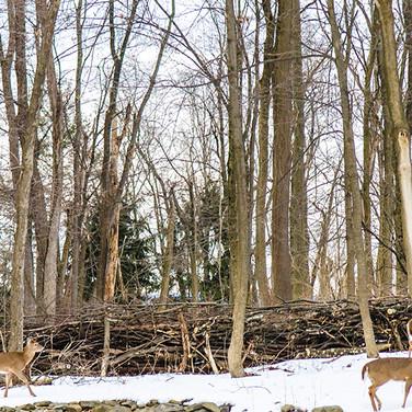 permaculture photo : Scott Corman http://www.scottcorman.com
