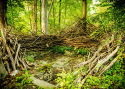 Visionary Permaculture