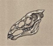 26. Shantak Skull.jpg