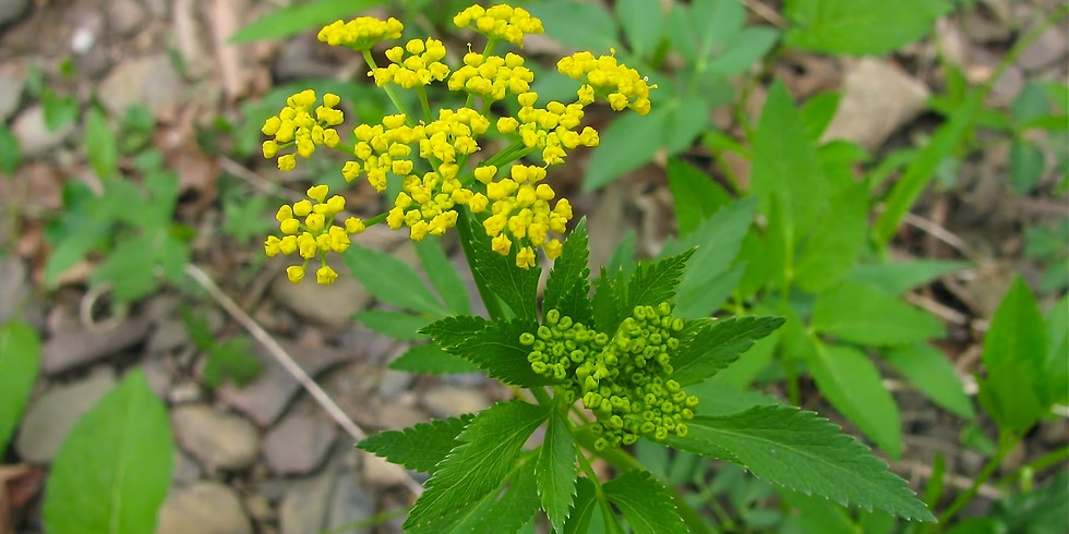 Earth Month:  Volunteer with New Castle Conservation Board (Native Plantings at Gedney)