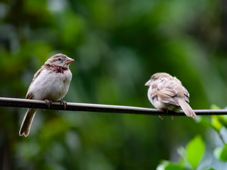 Learning to Heal from Birdsong