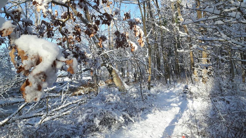 Winterbilder012.JPG