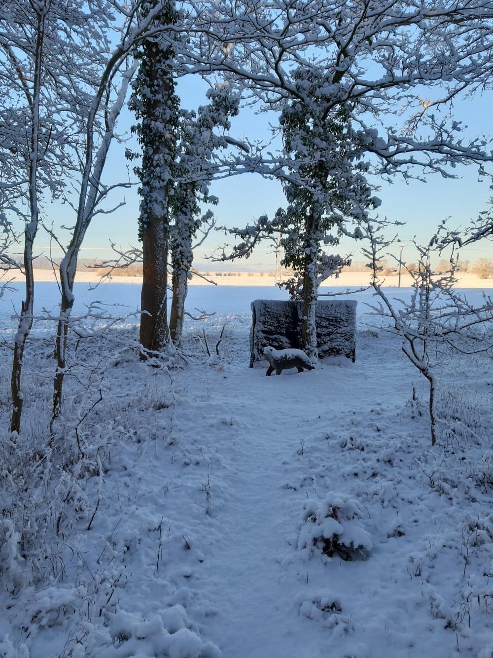 Winterbilder034.JPG