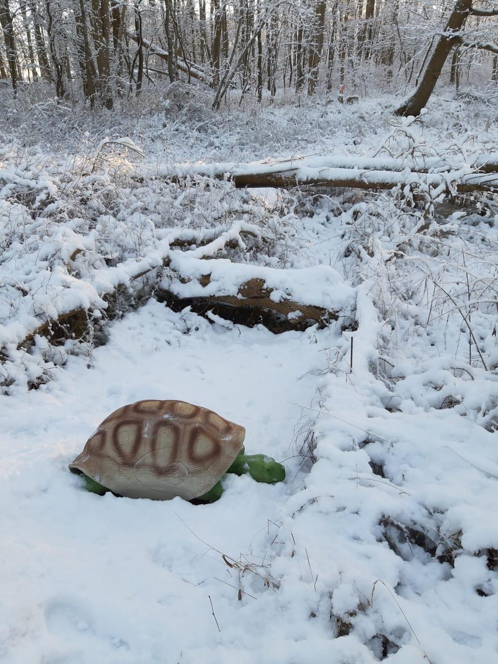 Winterbilder035.JPG