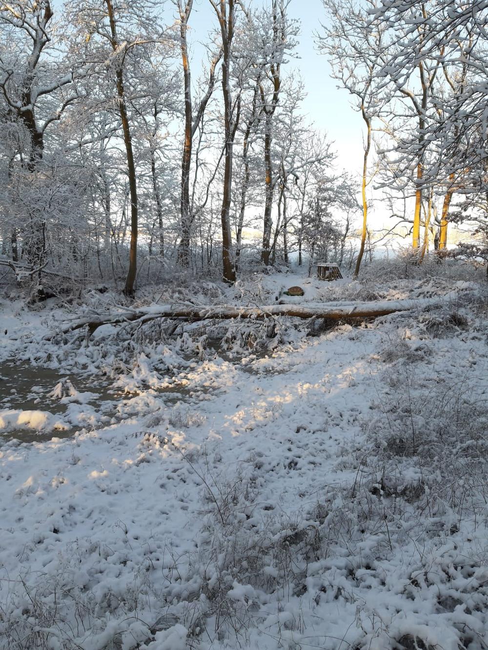 Winterbilder032.JPG