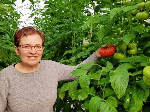 La tomate de Marmande vise l'indication géographique protégée pour se relancer