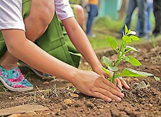 8 conseils pour préparer             un jardin écologique