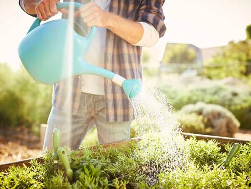 économiser l'eau au jardin        et au balcon