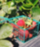 Basket%20of%20Strawberries_edited.jpg
