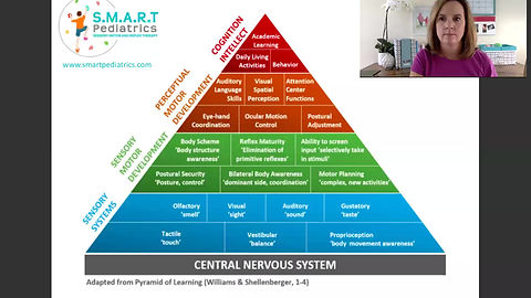 The sensory systems and sensory processing