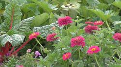 Beautiful_Flowers