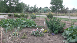 Community_gardens