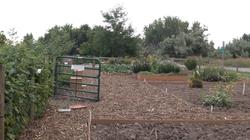 Community_Gardens_2