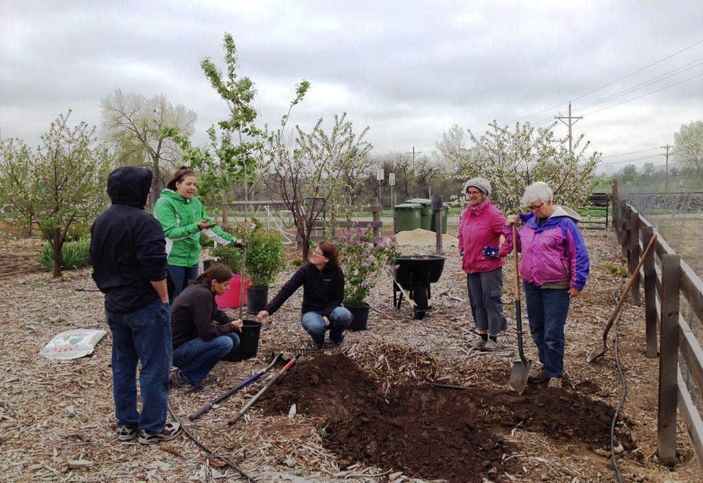 MasterGardners planting serviceberries MSH 5-7-16